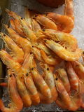 Prawns buffet. Fresh cooked prawns on ice Stock Photography