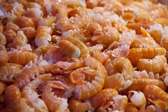 Prawns. Closeup of big raw pink prawns on sea market table Stock Image
