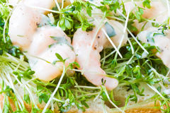 Prawns and cress royalty free stock photography