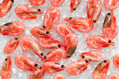 Prawns on crushed ice Stock Images