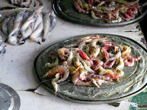 Prawns fish. This is photo of prawns at fish market Place- gorai beach,Mumbai in India royalty free stock photos