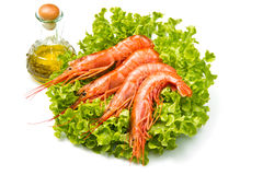 Prawns on fresh salad Royalty Free Stock Photography
