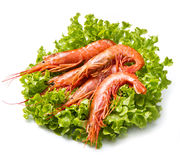 Prawns on fresh salad Stock Photography