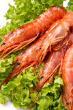 Prawns on fresh salad Stock Image