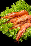 Prawns with fresh salad Stock Photography