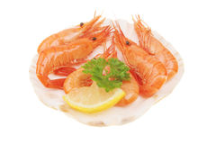 Prawns with garnish in shell Royalty Free Stock Photo