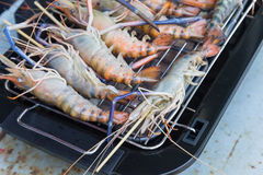 Prawns are grilled on the electric  Barbecue grill Royalty Free Stock Image