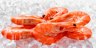 Prawns on Ice. Food background Royalty Free Stock Images
