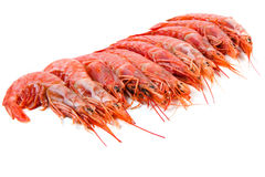 Prawns isolated on white Royalty Free Stock Photos