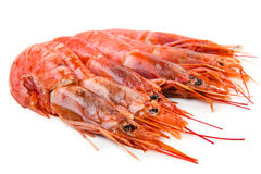 Prawns isolated on white. Some prawns isolated on white Stock Photography