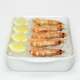 Prawns with lemon slices Prawn on crushed ice, rear view, close-up Royalty Free Stock Image