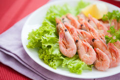 Prawns on lettuce leaf on a white plate Stock Photography