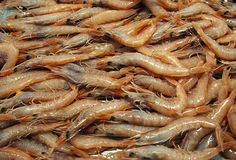 Prawns in a market Stock Photography