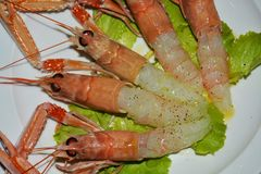 Prawns, oil and salad on a white plate background royalty free stock photography