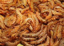 Prawns pile Royalty Free Stock Photography