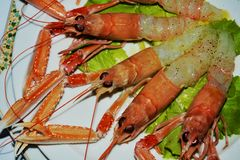 Prawns and salad background, close up royalty free stock photography