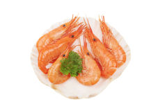 Prawns in scallop Stock Photography
