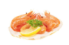 Prawns in shell Royalty Free Stock Image