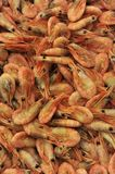 Prawns & Shrimp Royalty Free Stock Photo