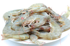 Prawns, shrimps Royalty Free Stock Photo