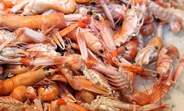Prawns and shrimps in the ice for sale in fish market in souther Royalty Free Stock Photography