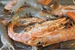 Prawns and shrimps raw and cooked Stock Photo