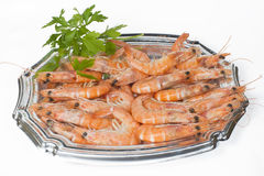 Prawns on white background Stock Photos