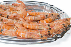 Prawns on white background Stock Photography
