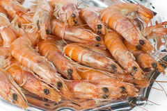Prawns on white background Stock Images