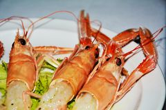 Prawns on a white plate background, close up Royalty Free Stock Photos
