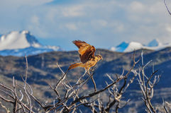 Pray bird in Parque Nacional Torres del Paine, Chile Royalty Free Stock Image
