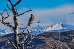Pray bird in Parque Nacional Torres del Paine, Chile Royalty Free Stock Photography