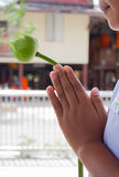 Pray. The hands of children with one lotus pray for buddha Stock Image