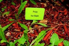 Pray for Rain. Sign among wet leaves Stock Images