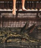 Pray to be prey. Legs of person sitting on Alligator`s tank,3d rendering vector illustration