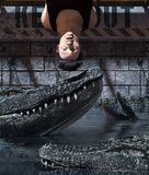 Pray to be prey. Man being tied up in Alligator`s tank,3d rendering royalty free illustration