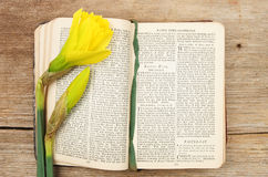 Prayer book and daffodil Royalty Free Stock Photo