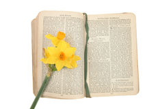 Prayer book and daffodil Royalty Free Stock Photos