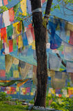 Prayer Flag Tree stock images