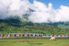 Prayer Flags And White Horse Stock Image