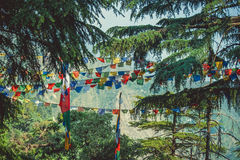 Prayer flags in a pine forest Stock Photos