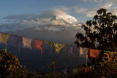 Prayer Flags at Poon Hill Stock Photo