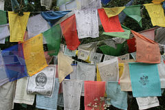 Prayer flags were hung on trees in the countryside near Paro (Bhutan) Stock Photo