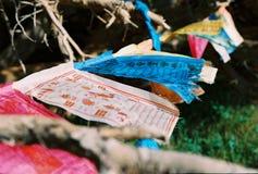 Colorful prayerflags hanging on tree Royalty Free Stock Photos