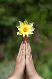 Prayer flower Royalty Free Stock Photos