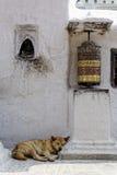 Prayer wheel and dog sleeping at Bothnath stupa in Kathmandu Royalty Free Stock Photography