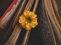Prayers. Yellow flower in book prayers, culture, religion, historic god stock photography