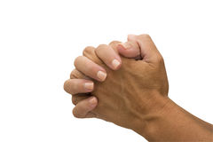 Praying. Two hands  isolated on a white background, praying Royalty Free Stock Image