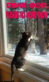 Praying kitten Royalty Free Stock Photography