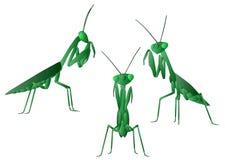 Free Praying Mantis Stock Photo - 25561550